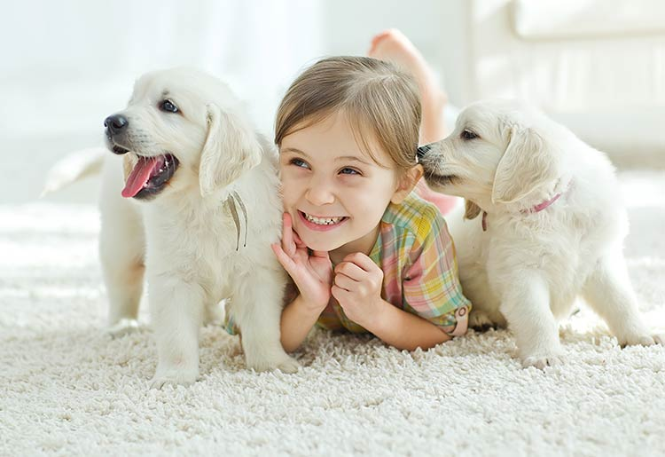 Pet Insurance FAQ: 4 Important Questions Answered