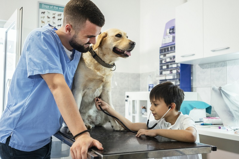 Care for your pet with insurance